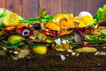 Earthwoms Living In A Colorful Compost Heap Consisting Of Rotting Kitchen Leftovers