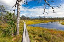 Viru Bog In Lahemaa National Park, Estonia