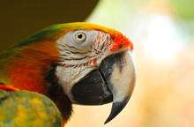 Bird, Parrot, Macaw, Animal, R...