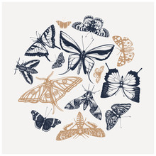 Vector Composition Of High Detailed Insects Sketches. Hand Drawn Butteries Illustrations In Collage Style. Entomological Drawings Set.