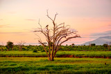 Fototapeta Sawanna - Landschaftsbilder aus dem Nationalpark Tsavo Ost Tsavo West und Amboseli