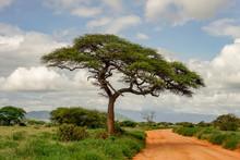 Landschaftsbilder Aus Dem Nationalpark Tsavo Ost Tsavo West Und Amboseli