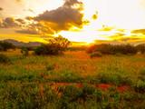 Sonnenuntergang und Sonnenaufgang in dem Nationalpark Tsavo Ost Tsavo West und Amboseli