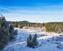 Winter Landscape Near Kvilda In Sumava National Park On Sunny Winter Day