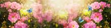 Fabulous Blooming Pink Rose Fl...