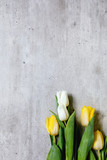 Fototapeta Tulipany - Variety of tulips flowers white and yellow with green leaves over grey texture background. Flat lay, copy space. Spring time.