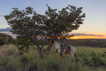 Saddled Horse Tied Under A Tre...