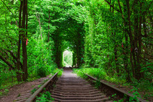 A Railway In The Spring Forest...