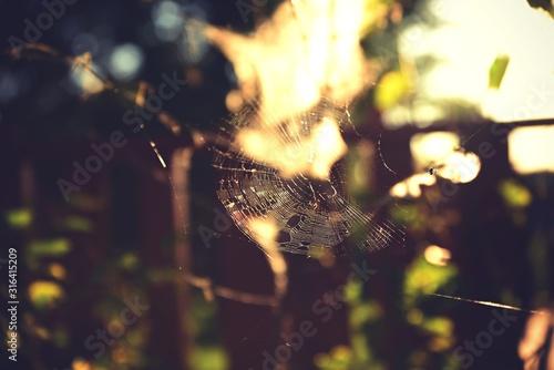 Photo spider web