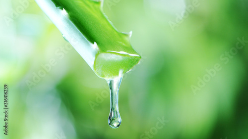 Photo Dropping aloe vera liquid from leaf.