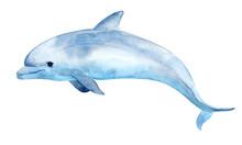 Cute Dolphin.
