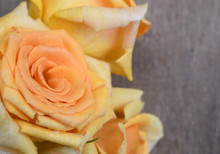 Close- Up Of Deep Yellow Roses Against A Blurred Brown Background