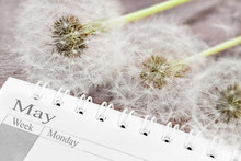 Calendar May With Dandelion Cl...