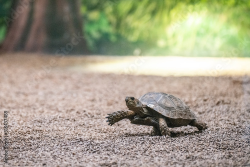 Photo turtle step