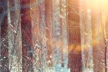 Winter Landscape In The Forest...