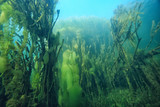 lake underwater landscape abstract / blue transparent water, eco nature protection underwater