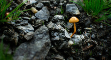 Tiny Orange Mushroom Growing I...
