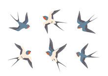 Set Of Swallows Birds In Flight