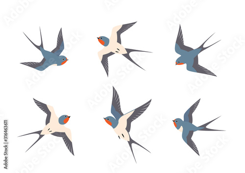 Photo Set of swallows birds in flight