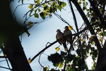 Dos Aves Románticas Acurrucad...
