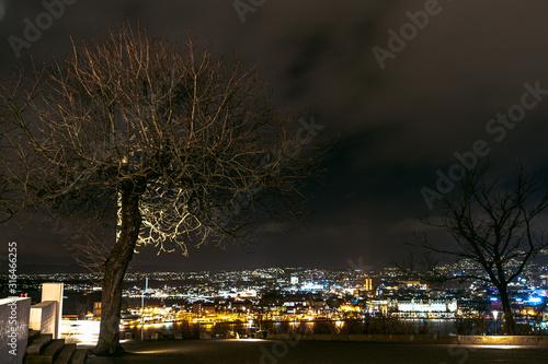 Fototapeta Piękne drzewo z rozłożystą koroną na tle miasta nocą obraz