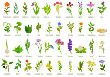 Medicinal Herbs Icons Set. Cartoon Set Of Medicinal Herbs Vector Icons For Web Design