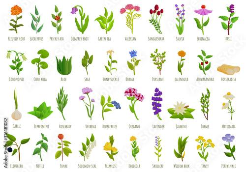 Photo Medicinal herbs icons set