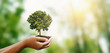 Leinwanddruck Bild woman hand holding tree on blur green nature background. concept eco earth day