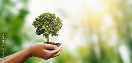 Cuadros en Lienzo woman hand holding tree on blur green nature background
