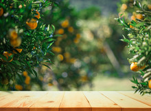 Empty Wood Table With Free Space Over Orange Trees, Orange Field Background. For Product Display Montage