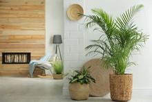 Houseplants In Wicker Pots On ...