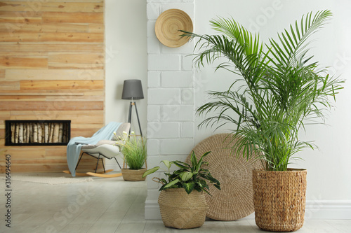 Obraz Houseplants in wicker pots on floor indoors. Interior design - fototapety do salonu