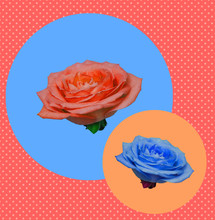 Funny Collage Of Orange And Blue Roses Buds Flowers On Circles And Background With Dots. Zine Culture. Retro Style.