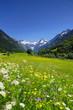 Berge mit Blumenwiese in den Alpen, Bayern