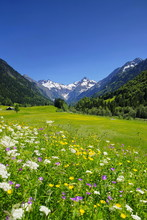 Berge Mit Blumenwiese In Den A...