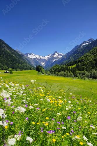 Berge mit Blumenwiese in den Alpen, Bayern Wallpaper Mural
