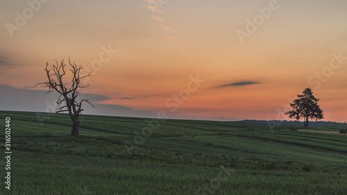 Wschód słońca nad pustymi polami
