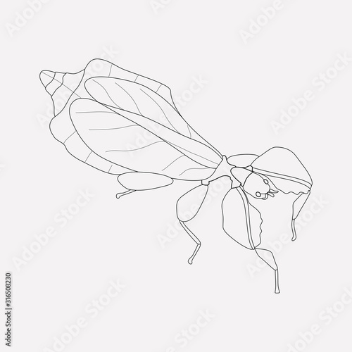 Photo Leaf insect icon line element