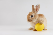Easter Bunny Rabbit With Egg O...