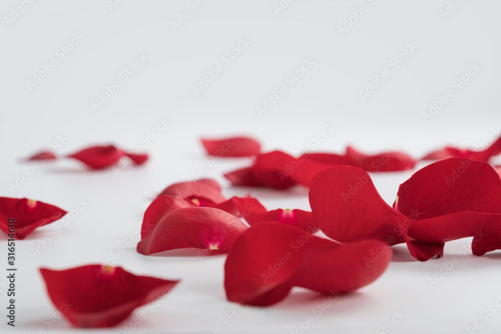 Fototapeta Red rose petals on white background