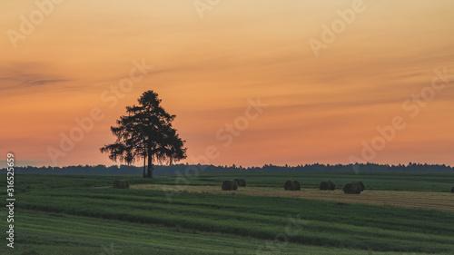 Pola uprawne o wschodzie słońca
