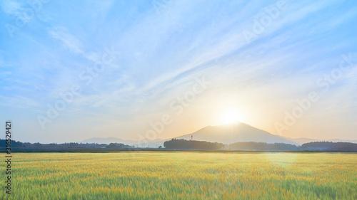 Obraz 筑波山山頂 日の出 麦畑 - fototapety do salonu