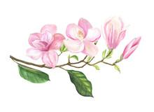 Flowering Branch Of Magnolia I...