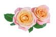 Leinwanddruck Bild - Two yellow-pink rose flowers