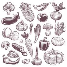 Sketch Vegetables. Healthy Foo...