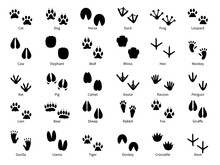 Animal Footprints. Walking Tra...
