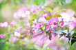 Spring blossoming delicate pink weigela flowers, garden blooming festive background, selective focus, shallow DOF, toned