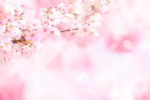桜がふわふわ舞い降りる