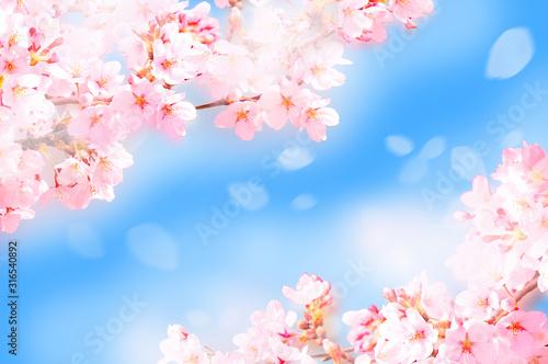 Obraz 桜がふわふわ舞い降りる - fototapety do salonu