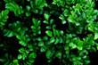 green leaf tree background